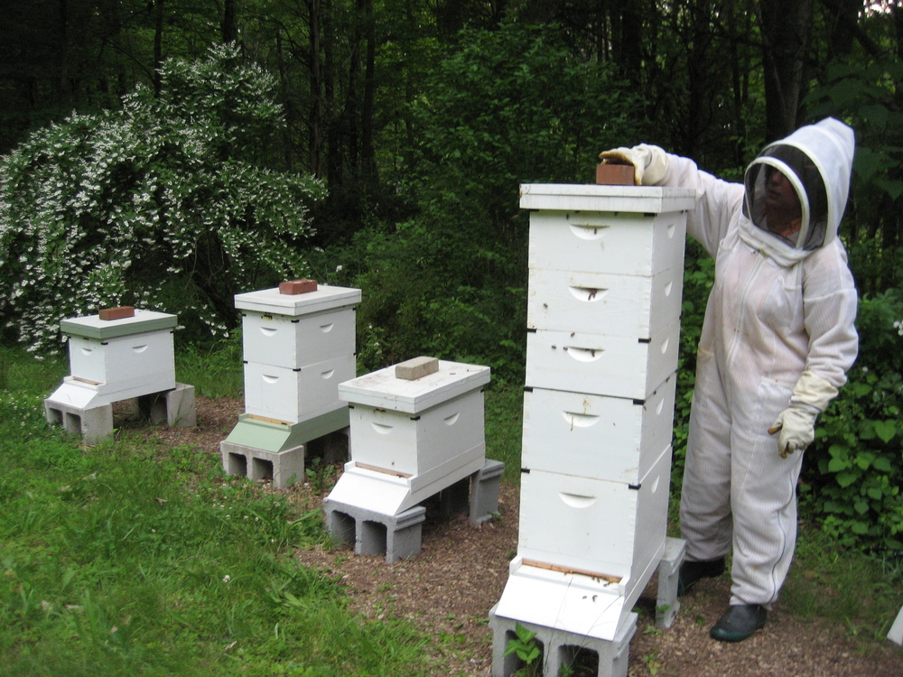Closing up the hives.